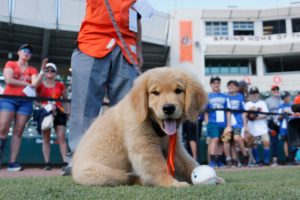 Bark at the Park: Dogs at MLB games