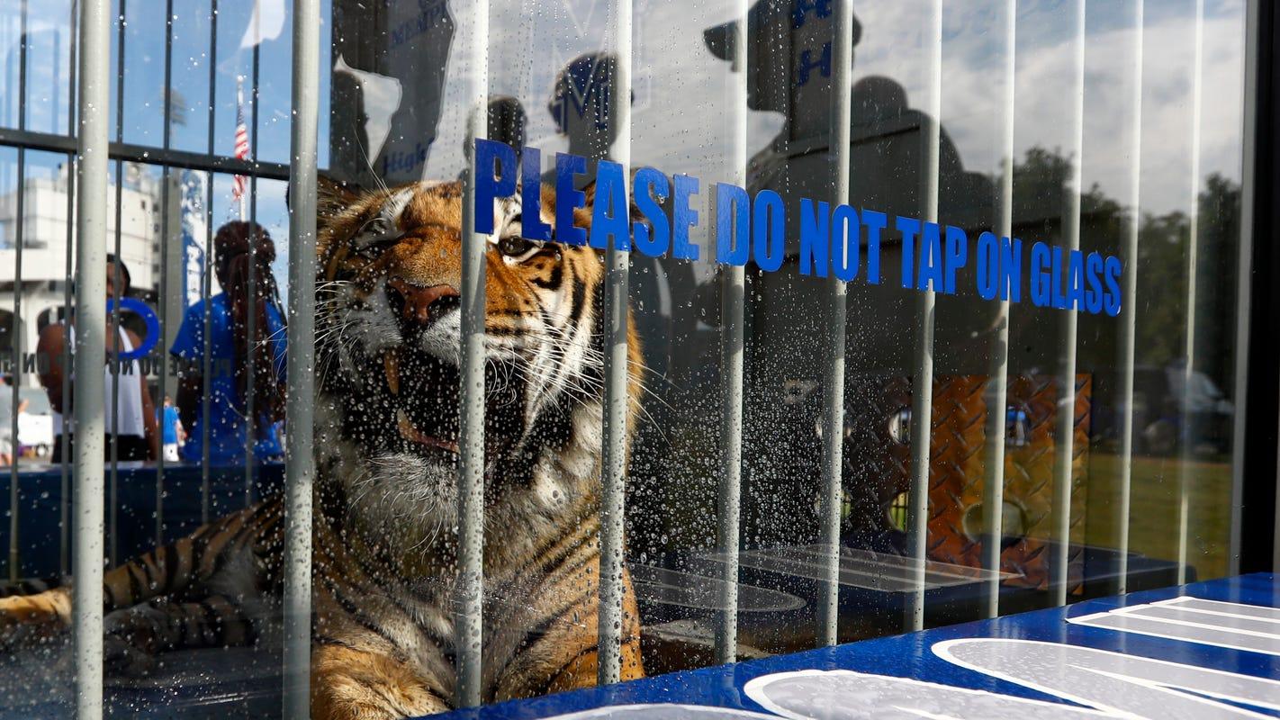 Memphis Tigers' live mascot TOM III dies after sudden illness