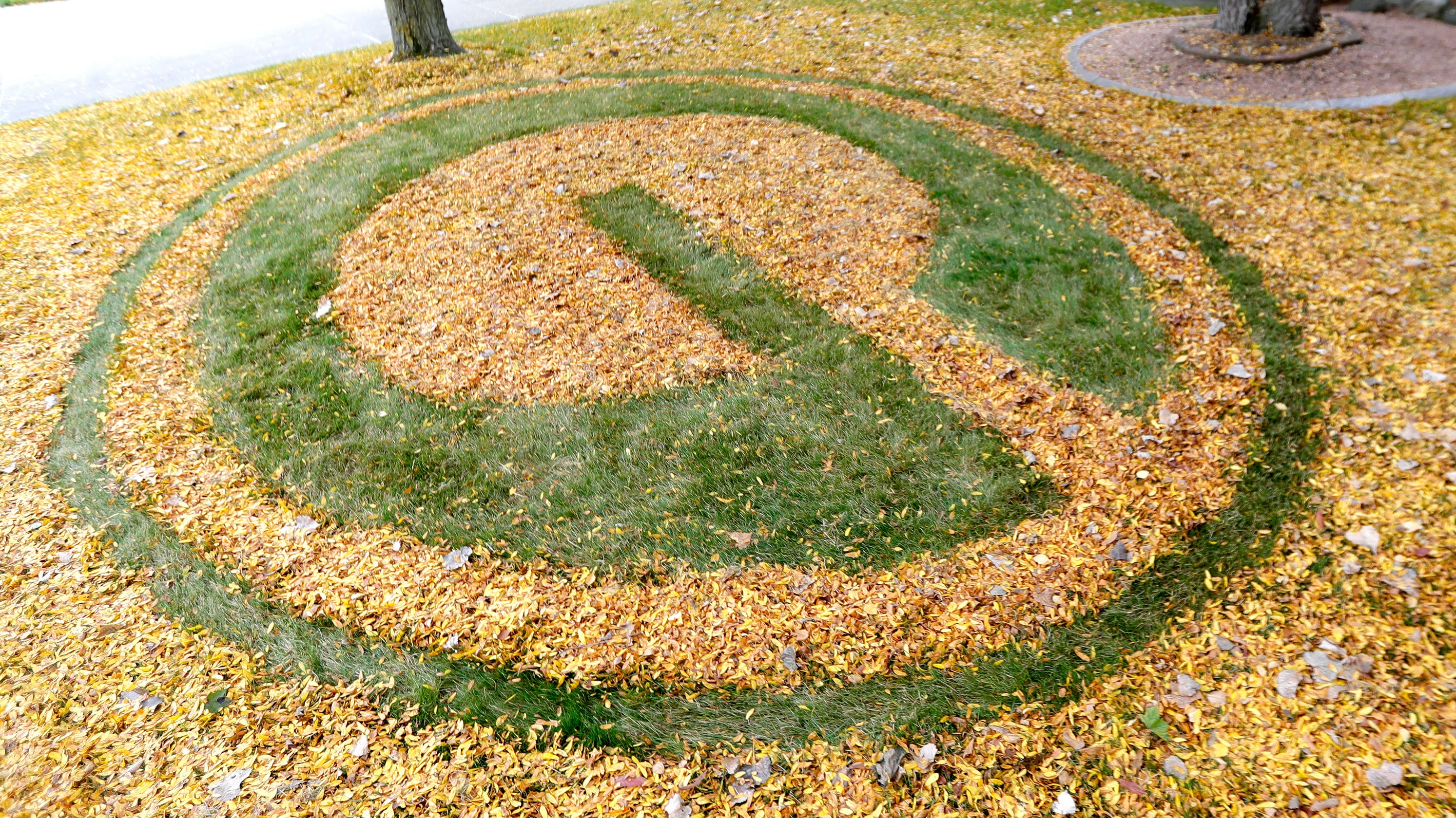 Packers fan rakes yard into green-and-gold art display